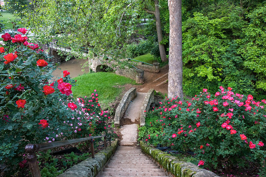 ritter park rose garden, west virginia