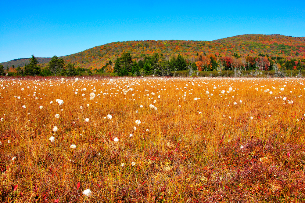 cranberry glades botanical area, west virginia